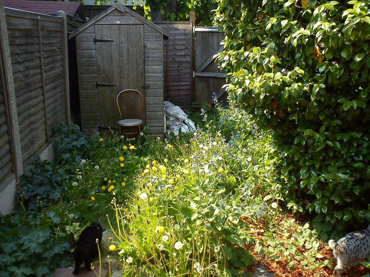 My garden before